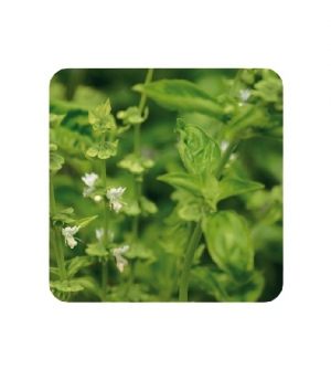 Aceite esencial albahaca exótica