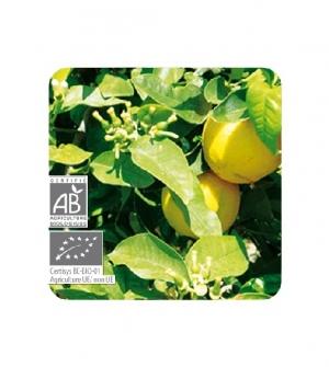 Aceite esencial Bio Bergamota