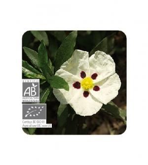 Aceite esencial Bio Jara cv Córcega
