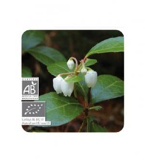 Aceite esencial Bio Gaulteria olorosa