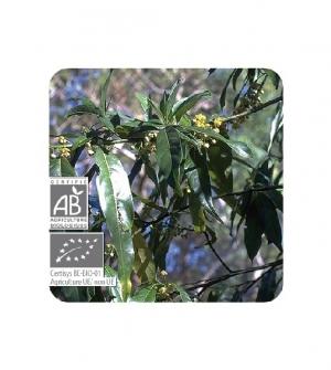 Aceite esencial Bio Verbena exótica