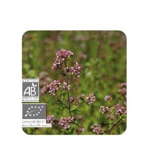 Aceite esencial Bio Orégano de inflorescencias compactas